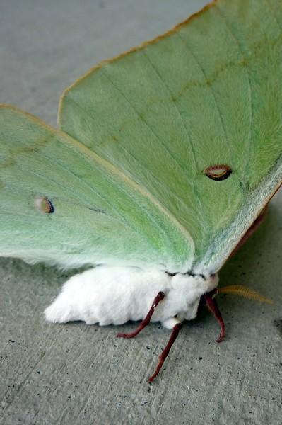 Mothra6
